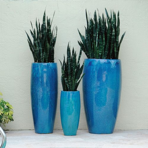 mother in law's tongue in planter - Google Search