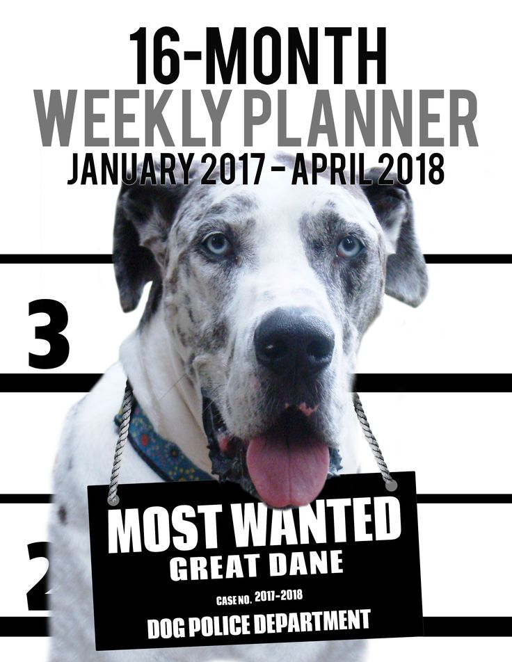 2017-2018 Weekly Planner - Most Wanted Great Dane: Daily Diary Monthly Yearly Calendar (Dog Planners) 2017-2018 Weekly Planner for Dog lovers - Great Dane lovers in particular! Adorable Most Wanted Great Dane image graces the cover of this cute engagement calendar.  Popular easy to use planner format shows a week-at-a-view to help keep you organized 7 days at a time.     Calendar/planner covers 16 months (January 2017 -- April 2018).