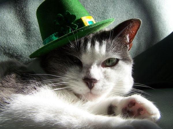 leprecat: Animals Cat Kittens, I M Lucky, Funny Cat, Pets Cats, Animals Irish, St. Patrick'S Day, Happy St