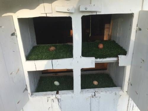 DIY Easy Clean Chicken Nesting Box - also prevents eggs from cracking... #diy #chickens