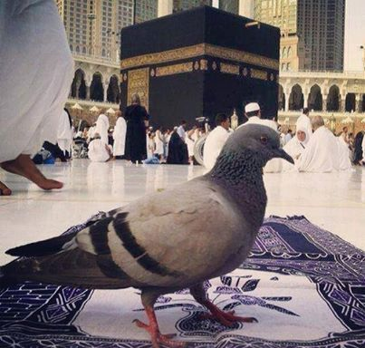 DesertRose,;,☪The Kaaba or Ka'aba is a cuboid building at the center of Islam's most sacred mosque, Al-Masjid al-Haram, in Mecca, Saudi Arabia. It is the most sacred site in Islam. Wherever they are in the world, Muslims are expected to face the Kaaba – i.e. when outside Mecca, to face toward Mecca – when performing salat (prayer). From any point in the world, the direction facing the Kaaba is called the qibla,;,