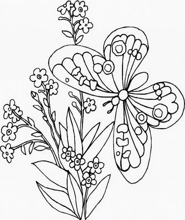 152 best images about Butterfly Printables on Pinterest  Dovers