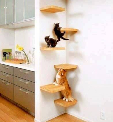 TIP: turn an un-used corner into a kitty corner with some simple shelving arrangement!