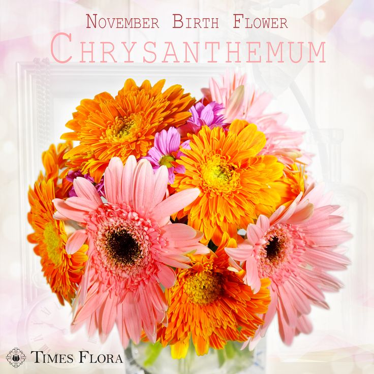 November birth flower is Chrysanthemum. Chrysanthemum also symbolizes long life, joy, optimism and fidelity. A red chrysanthemum symbolizes love, white symbolizes loyal love and truth, while yellow means slighted love.  Shop Now & Save 15% Off On All Flower Arrangements! See more at: http://www.timesflora.com/Mira  #flowers #florist #australia #timesflora #delivery #November #birth #Chrysanthemum
