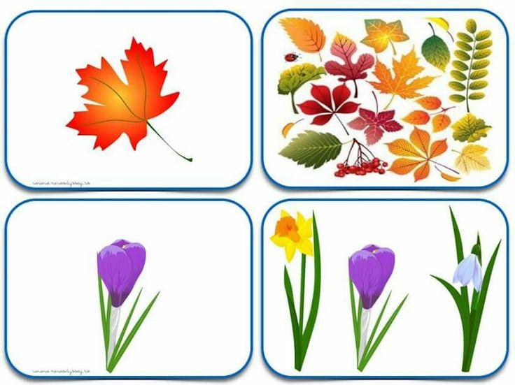 (2015-06) Blad, blomst