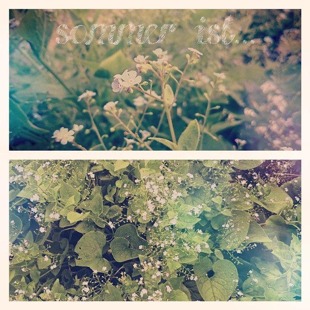 SOMMER IST... i really like our garden flowers in the summer. I always get summerfeelings when i see them Photo by Frauke Hübner Märzkind Fotografie