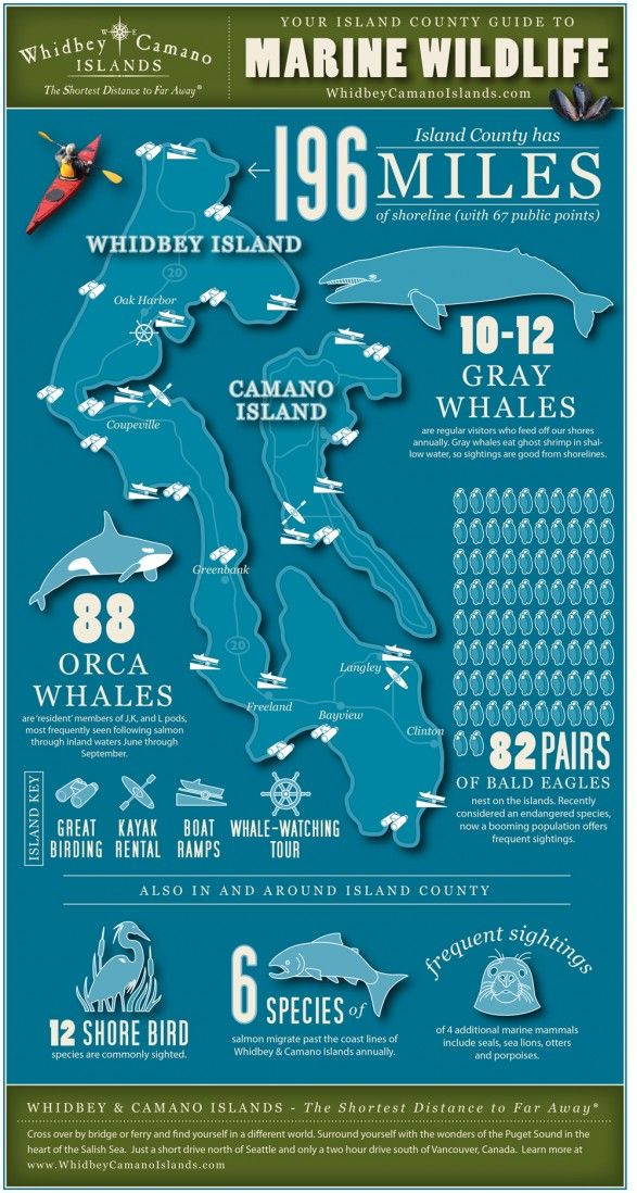 Marine Wildlife Infographic