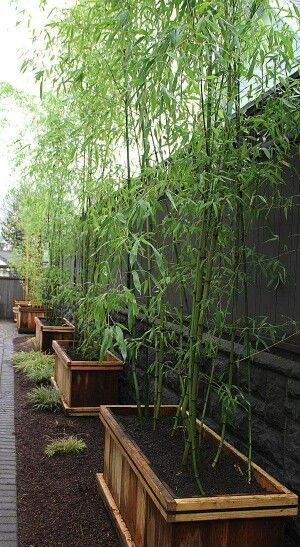 Bamboo Planters - Great way to add a natural 'screen' for privacy, moveable & will keep the bamboo from taking over the yard.