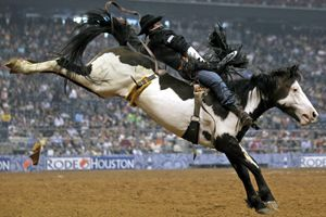 I do not like bronc busting!!  But I love the splash white on this paint.