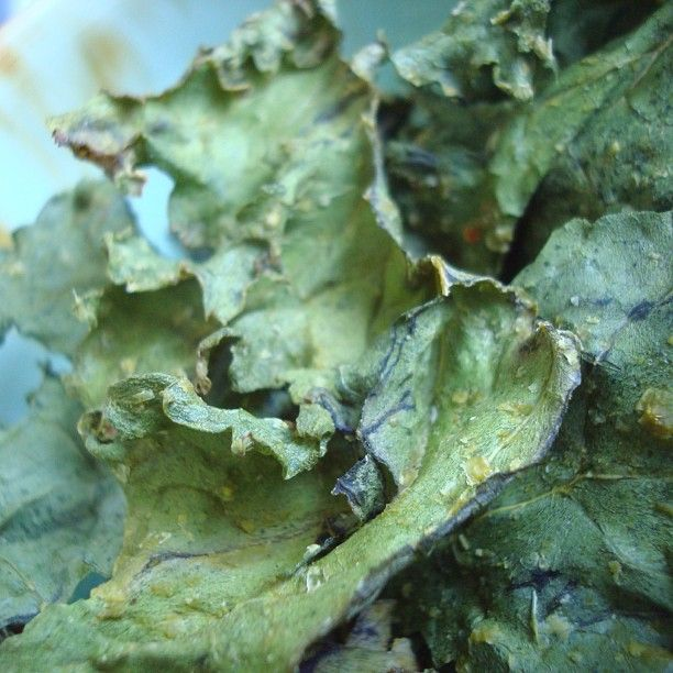 """14 Likes, 2 Comments - Margaret Lee R.Ac B.Sc RHN (@nutriacure) on Instagram: """"Made these #kale chips yesterday morning and ate them all last night!  #yummy #healthy #nutritious…"""""""