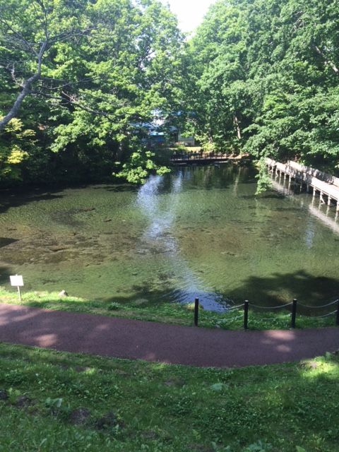 夏がオススメ。京極町のふきだし公園は羊蹄山の湧き水が出るおすすめスポットです。