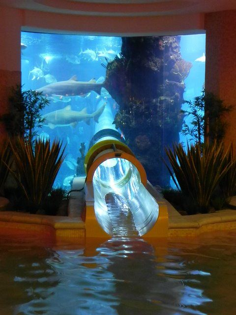 Water slide pool at the Golden Nugget, Las Vegas. Yes, those are real sharks.