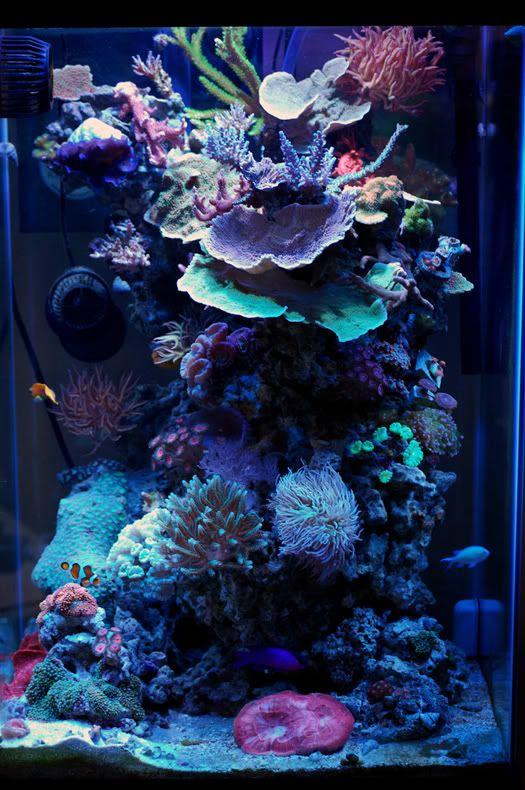 25 best ideas about aquarium backgrounds on pinterest for Fish tank background ideas