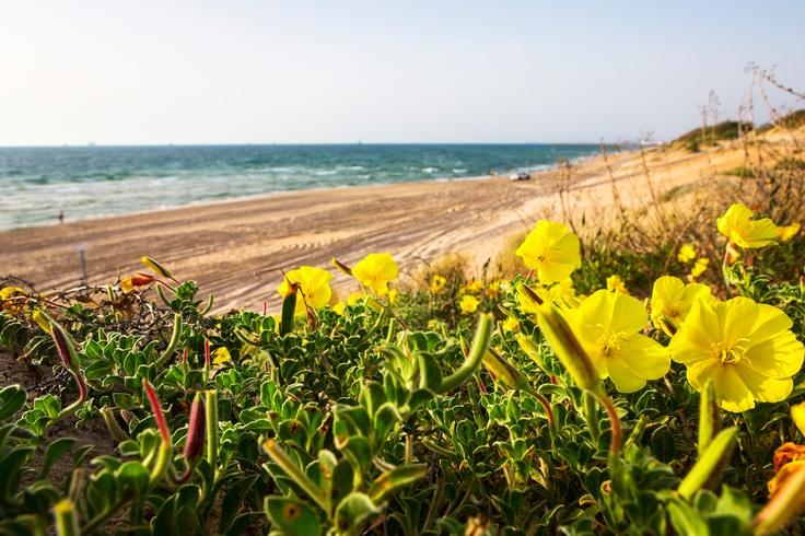 Desert flowers on Ashdod beach