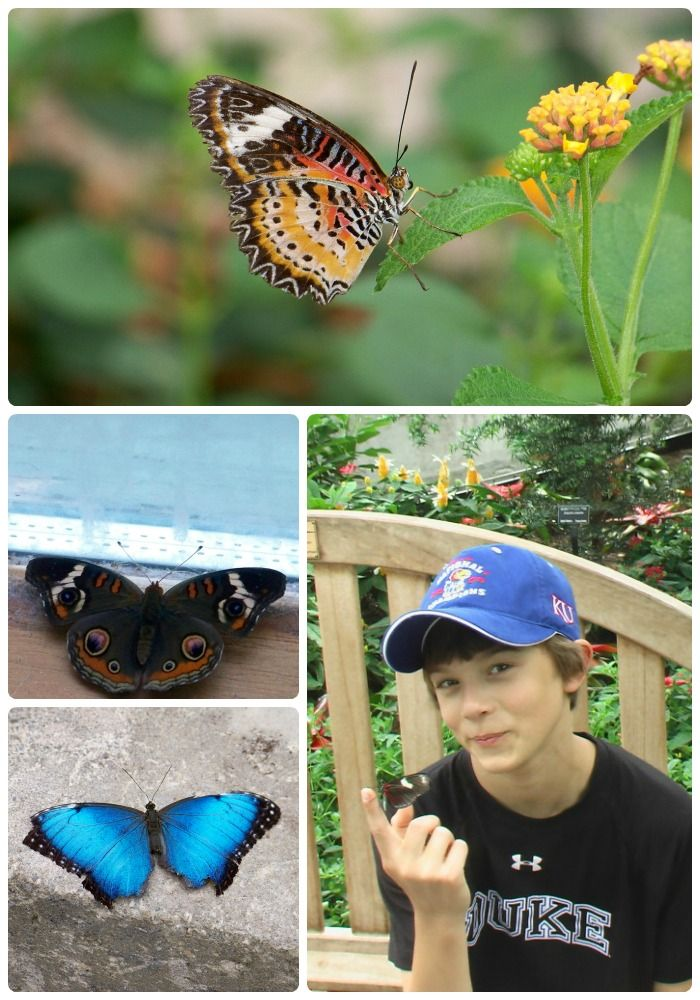 50+ Butterfly activities for Kids -- where to find butterflies, crafts and science activities!