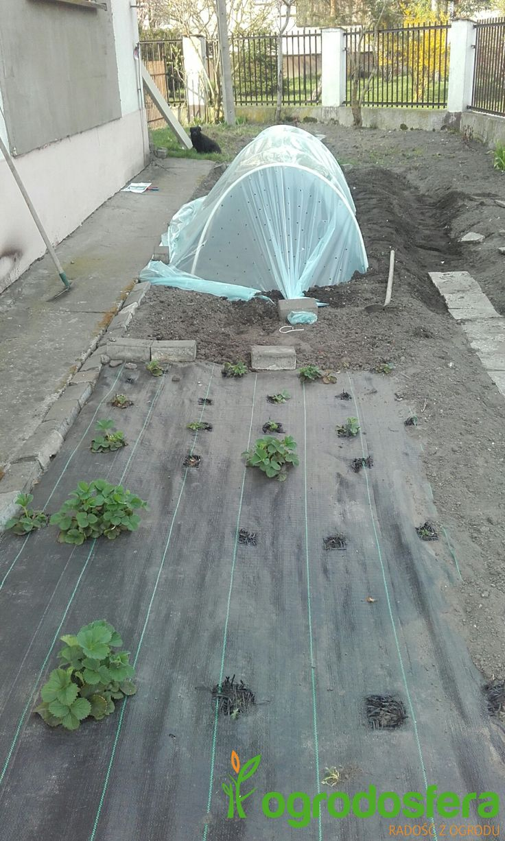 Samodzielna uprawa roślin to sposób na zdrowie http://ogrodosfera.pl/niski-tunel-foliowy-pcv-lem-c3-mini-pcv-1-2x3m