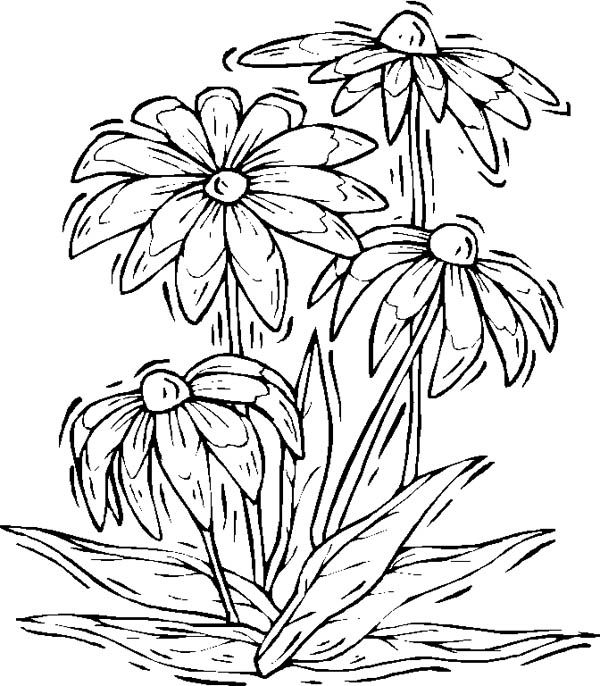 Narcissus Flower Coloring Page Stamp