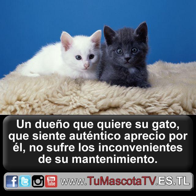 #perritos #gatitos @BigThreePicks