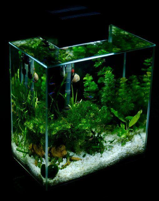 Thedailyattack Home Design Ideas Travel And Holidays Destination Suggest Diy Fish Tank Aquascape Aquarium Nature Aquarium