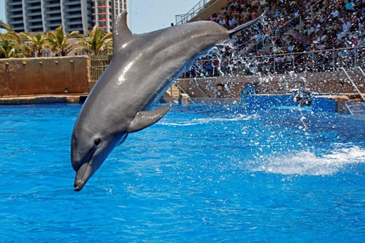 Great dolphin show ...