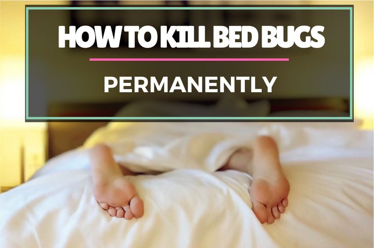 Here's a quick step-by-step guide on how to kill bed bugs permanently. The threat of bed bugs in your home has massively reduced since the 1900s but these