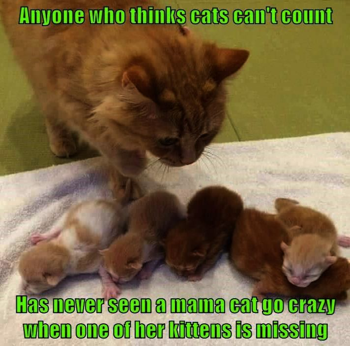 Cats And Kittens Sydney Cats And Kittens Gumtree Ni Cute Animals
