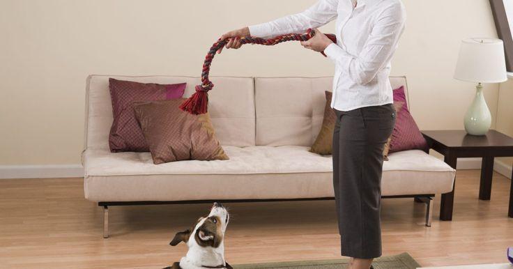 Como tirar manchas de xixi de cachorro do carpete. Acidentes enquanto você ensina o cão a fazer as necessidades no lugar certo são comuns na maioria dos lares. Enquanto os cães mais velhos aprenderam a urinar ao ar livre, os mais jovens não, e muitas vezes mancham carpetes, tapetes e almofadas. Se o seu tapete foi vítima de um acidente desse tipo, remova a mancha imediatamente antes que ela fique ...