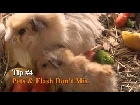 Видеоурок «Советы по фотосъемке домашних животных» | ФОТОГОРА