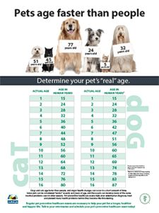 Good general information about senior pet care; FAQ page for American Veterinary Medical Association; good jumping off point for further research