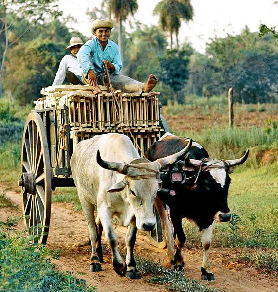 3. Paraguay culture is highly influenced by various European countries, particularly Spain, which are combined with indigenous culture. This cultural blend is seen in Paraguay's forms of arts, crafts, music, festivals, literature, cinema, fashion, languages.
