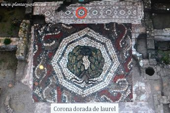 Mosaico de corona de laurel. El mito de Apolo y Dafne, como la ninfa se convierte en el 1º árbol de Laurel