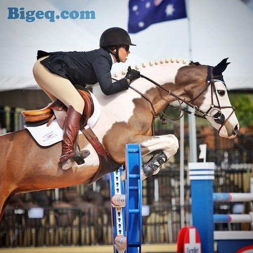 Another favorite color - a #pinto… Mon Gamin and #briannegoutal #bigeq #hunterjumper
