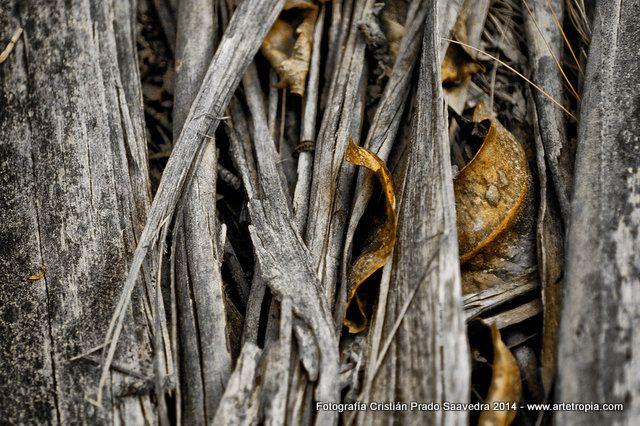 Eucaliptus Bark 02 By Chilean Photographer Cristián Prado Saavedra - www.artetropia.com by #Cristian_Prado_S