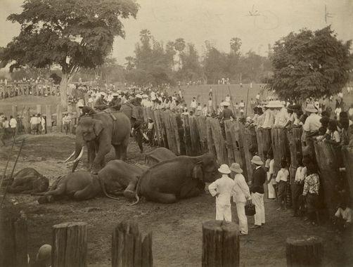 1904-ayutthaya-roundup-A king chulalongkorn