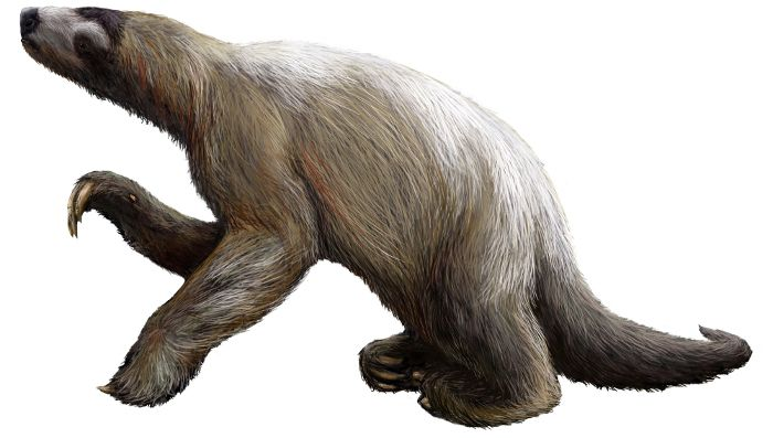 Sloth Fact 11 – Giant Monster Sloths Sloths weren't always small-ish little critters that hung around in the tress. Back in prehistoric time they used to be absolutely ginormous! They used to be about 5-7 metres tall and weighed nearly 7 tonnes! Imagine something like that dangling out a tree… Yeah, it's not gonna happen. These elephant sized sloths earned the nicknames 'The Great Beast' and 'The Great Claw'.