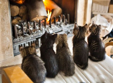 kittens getting warm by the fire