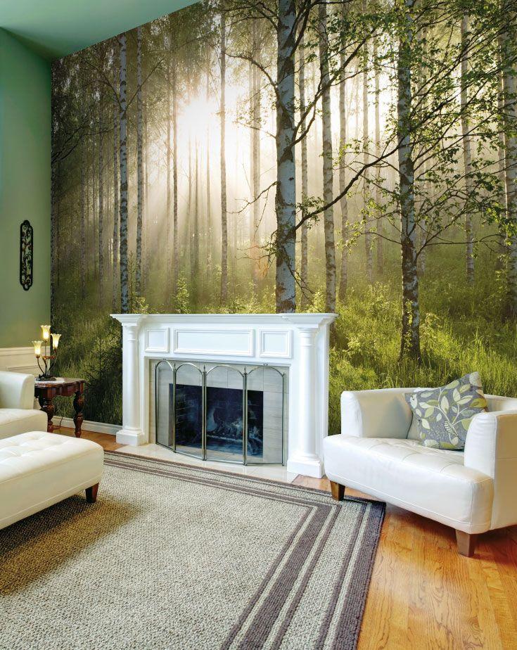 Birch Forest Sunlight Wall Mural Designer WallpaperKitchen Dining RoomsWall