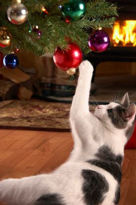 To  all  in  #BeckBromFL    Have  a  Merry  Christmas  From  Richard   http://appearoo.com/RSGardeningServices