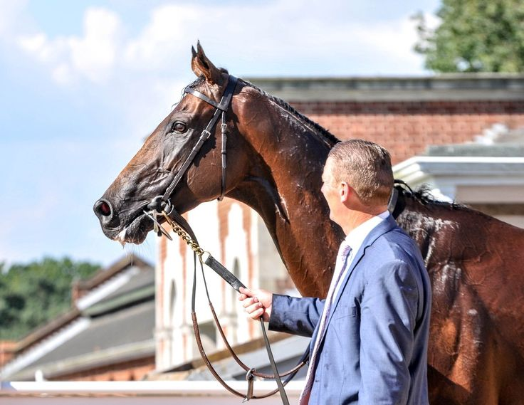 HIGHLAND REEL after winning today's King George