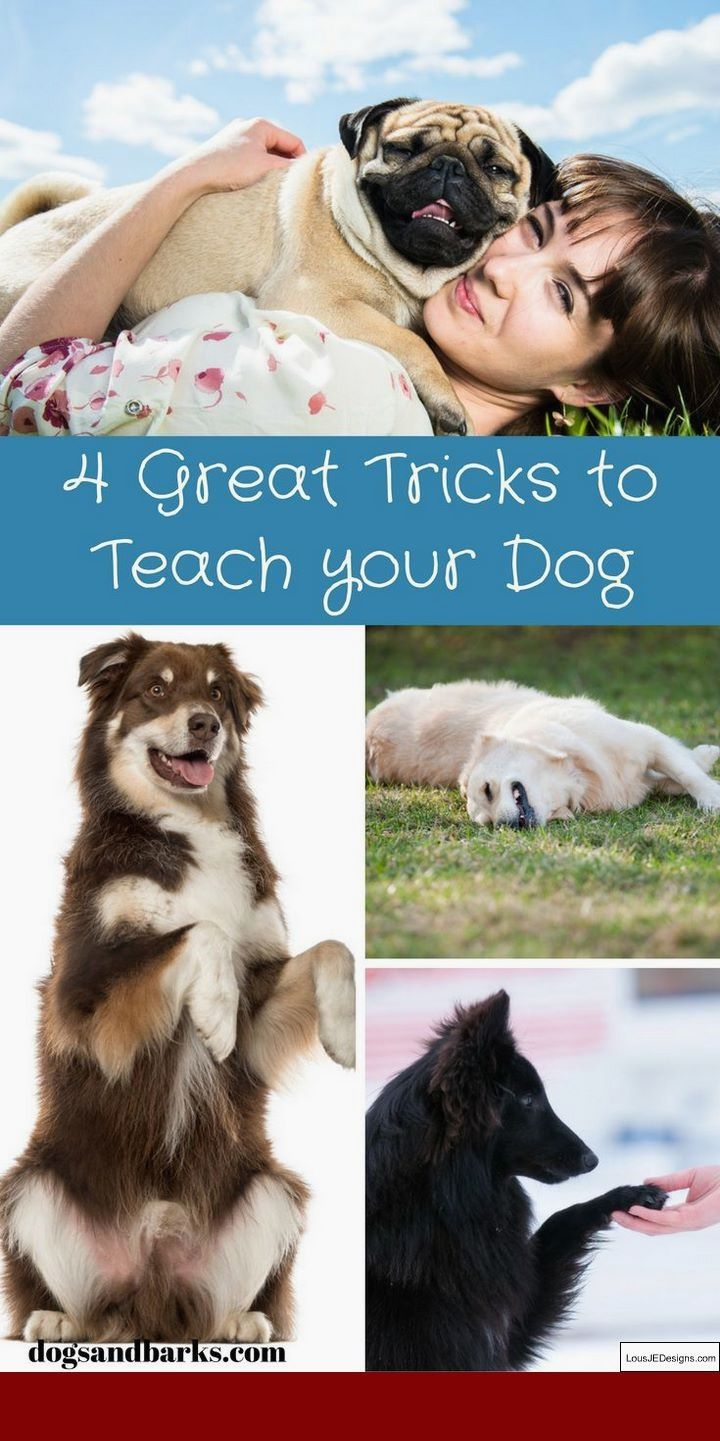 Best Way To House Train A 1 Year Old Dog And Pics Of How To Train