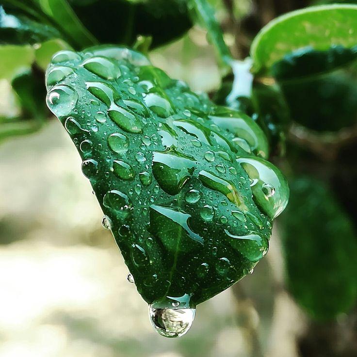 #Bonsai #naturelover #mothernature #mothernaturelove #plants #water #summer