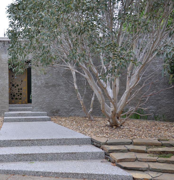Dwarf Snow Gum – Eucalyptus pauciflora 'Little Snowman' (7x5m)