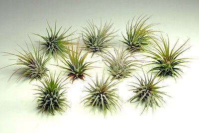 Plant Terrariums For Sale