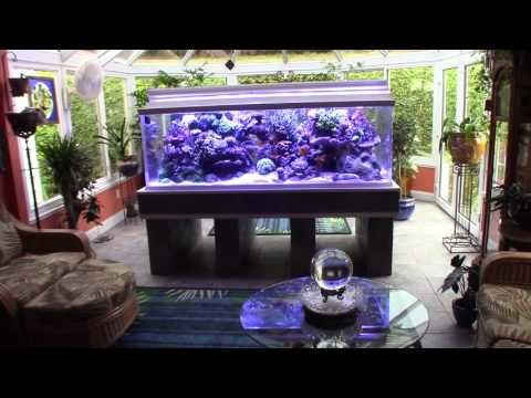 Sun room 430 gallon reef,  now with Ecotech Radion G4s.