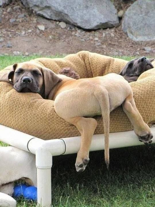 what the?....I wanna sleep like these two do. Lol. Love the bed. PVC!