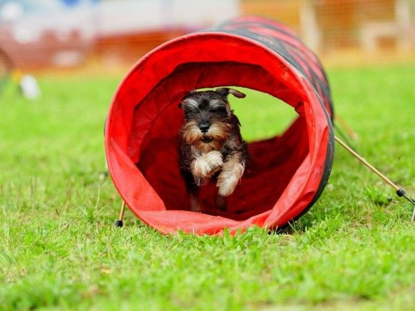 Zomertip: bouw een agility parcours in de achtertuin voor je hond. Leuk om samen te trainen en tegelijk lekker in beweging.
