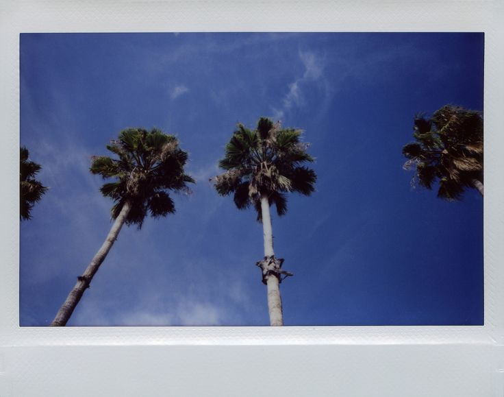 https://flic.kr/p/G9dhNm | California Palms | Fujifilm Instax Wide 210  -------------------------- About Me - about.me/edwardconde
