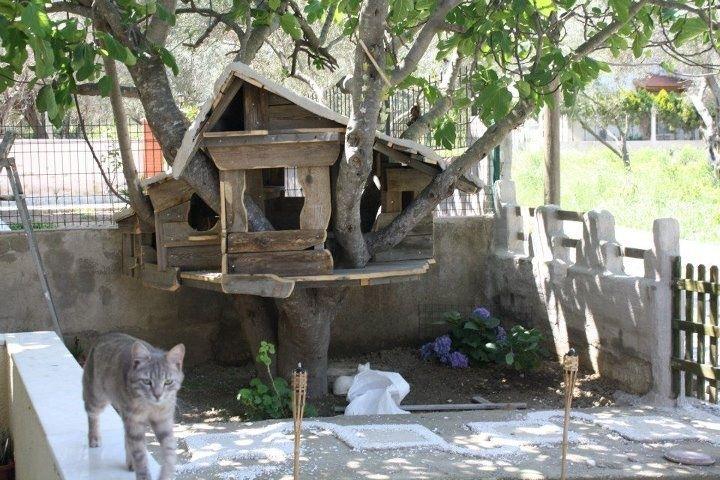 outdoor cat trees   Outdoor Cat Tree House Ian tomlin's cats tree house