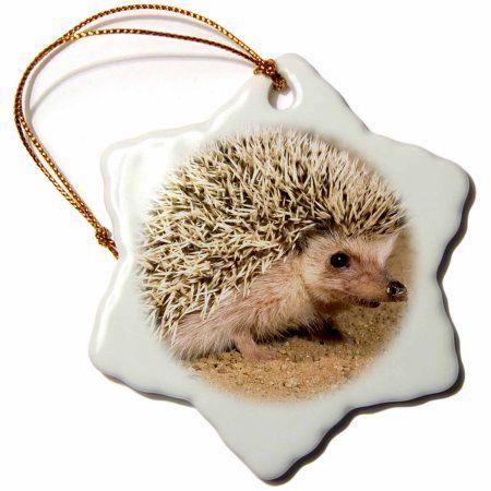 3dRose African Hedgehog wildlife, Native to Africa - NA02 DNO0400 - David Northcott, Snowflake Ornament, Porcelain, 3-inch