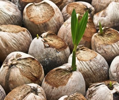 Ketone Found in Coconut Oil Improves Brain Disorders From Alzheimer's and Dementia to Autism and Epilepsy and More.